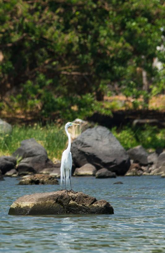 aves_turismo_isletas_de_granada_nicaragua