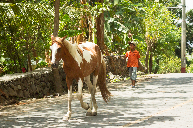 alquiler-caballos-playa-santo-domingo-ometepe
